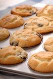 φρέσκα muffins βακκινίων Στοκ Φωτογραφία