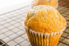 φρέσκα muffins Στοκ εικόνες με δικαίωμα ελεύθερης χρήσης