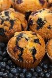 φρέσκα muffins στοκ εικόνα