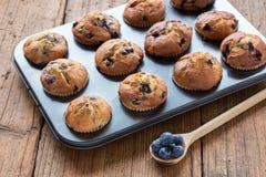 φρέσκα muffins Στοκ φωτογραφία με δικαίωμα ελεύθερης χρήσης