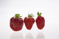 Φρέσκα strawberryes στοκ φωτογραφία