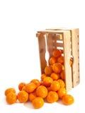 Φρέσκα tangerines κλουβιών Στοκ Εικόνα