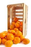 Φρέσκα tangerines κλουβιών Στοκ Εικόνες