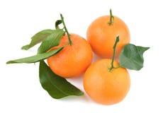 φρέσκα tangerines μίσχων φύλλων πορτοκαλιά Στοκ εικόνες με δικαίωμα ελεύθερης χρήσης