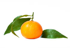 φρέσκα tangerines Στοκ Εικόνα