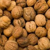 φρέσκα wallnuts Στοκ φωτογραφία με δικαίωμα ελεύθερης χρήσης