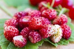 Φρέσκες άγριες φράουλες στο φύλλο και τον πίνακα, υγιής διατροφή, μακροεντολή κινηματογραφήσεων σε πρώτο πλάνο Στοκ Φωτογραφία