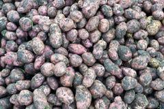 Φρέσκες άπλυτες πατάτες Στοκ Φωτογραφία