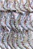 Φρέσκες γαρίδες στον πάγο στην αγορά 3 τροφίμων στοκ φωτογραφία με δικαίωμα ελεύθερης χρήσης