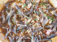 Φρέσκες γαρίδες σαλάτας Στοκ φωτογραφία με δικαίωμα ελεύθερης χρήσης