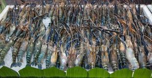 Φρέσκες γαρίδες σε έναν δίσκο στοκ φωτογραφίες με δικαίωμα ελεύθερης χρήσης