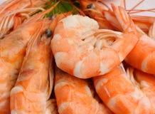 φρέσκες γαρίδες Στοκ εικόνα με δικαίωμα ελεύθερης χρήσης