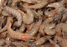 φρέσκες γαρίδες Στοκ Εικόνα