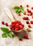 Φρέσκες γλυκές άγριες φράουλες σε ένα ξύλινο κουτάλι στοκ εικόνα με δικαίωμα ελεύθερης χρήσης