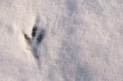 Φρέσκες διαδρομές των πουλιών στο άσπρο χιόνι, τοπ άποψη Στοκ εικόνα με δικαίωμα ελεύθερης χρήσης