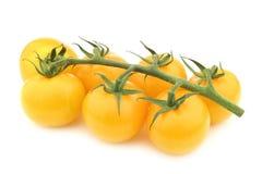 Φρέσκες κίτρινες νόστιμες tom ` ` ντομάτες στην άμπελο Στοκ Εικόνα