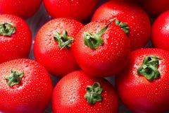 Φρέσκες κόκκινες ντομάτες με τις πτώσεις Στοκ εικόνες με δικαίωμα ελεύθερης χρήσης