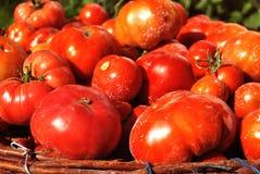φρέσκες κόκκινες ντομάτες Στοκ φωτογραφίες με δικαίωμα ελεύθερης χρήσης