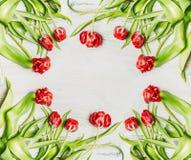 Φρέσκες κόκκινες τουλίπες, πλαίσιο λουλουδιών στο άσπρο ξύλινο υπόβαθρο, πλαίσιο Στοκ Φωτογραφίες