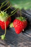 Φρέσκες κόκκινες φράουλες Στοκ Εικόνες