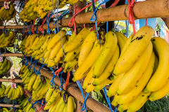 Φρέσκες μπανάνες στοκ φωτογραφία με δικαίωμα ελεύθερης χρήσης