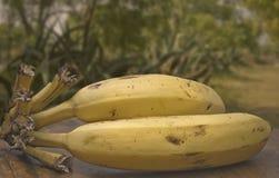 Φρέσκες μπανάνες στοκ φωτογραφίες