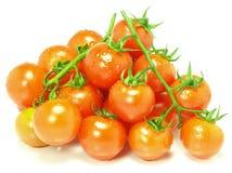 φρέσκες ντομάτες κερασιών Στοκ Φωτογραφίες