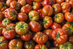 φρέσκες ντομάτες κόκκινες ντομάτες Οργανικές ντομάτες του χωριού αγοράς Ποιοτικό υπόβαθρο από τις ντομάτες Στοκ Εικόνα