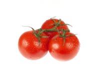 Φρέσκες ντομάτες με τις απελευθερώσεις ύδατος Στοκ Φωτογραφία