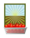 Φρέσκες ντομάτες με το ανοικτό έδαφος Στοκ φωτογραφία με δικαίωμα ελεύθερης χρήσης