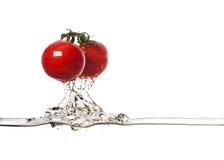 φρέσκες ντομάτες παφλασμών Στοκ Εικόνες