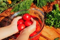 Φρέσκες ντομάτες στα χέρια Στοκ Εικόνες