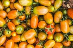 φρέσκες ντομάτες σωρών Κινηματογράφηση σε πρώτο πλάνο στοκ φωτογραφίες με δικαίωμα ελεύθερης χρήσης