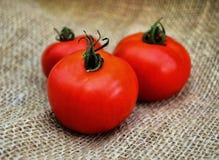 φρέσκες ντομάτες Στοκ Φωτογραφία