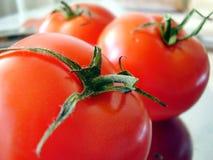 φρέσκες ντομάτες Στοκ εικόνες με δικαίωμα ελεύθερης χρήσης