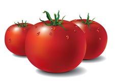 φρέσκες ντομάτες Στοκ φωτογραφία με δικαίωμα ελεύθερης χρήσης