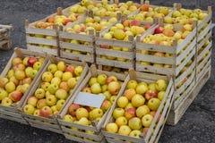 Φρέσκες οργανικές σειρές των κλουβιών μήλων στην αγορά αγροτών Στοκ Εικόνες