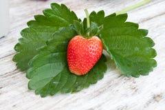 φρέσκες οργανικές φράουλες Στοκ Φωτογραφίες