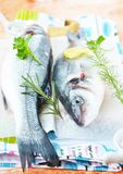 Φρέσκες πέρκες θάλασσας με τα χορτάρια Στοκ Εικόνα
