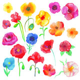 Φρέσκες παπαρούνες Watercolor Στοκ Εικόνες
