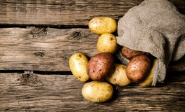 φρέσκες πατάτες Στοκ εικόνες με δικαίωμα ελεύθερης χρήσης