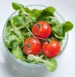 φρέσκες πράσινες ντομάτες σαλάτας Στοκ Φωτογραφία