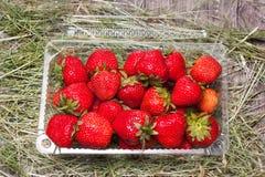 φρέσκες πλαστικές φράουλες κιβωτίων Στοκ φωτογραφία με δικαίωμα ελεύθερης χρήσης