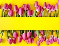 φρέσκες ρόδινες τουλίπες Όμορφη ευχετήρια κάρτα Έννοια διακοπών άνοιξη Copyspace απαγορευμένα απεικόνιση αποθεμάτων