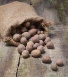 Φρέσκες συγκομισμένες πατάτες που ανατρέπουν από μια burlap τσάντα, σε ένα roug Στοκ Εικόνα
