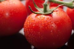 φρέσκες τέλειες κόκκινες ντομάτες υγρές Στοκ εικόνα με δικαίωμα ελεύθερης χρήσης