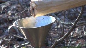 Φρέσκες υγιείς πτώσεις σφρίγους σημύδων στη χοάνη μετάλλων φιλμ μικρού μήκους