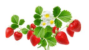 Φρέσκες φράουλες ορεκτικών στοκ εικόνες με δικαίωμα ελεύθερης χρήσης