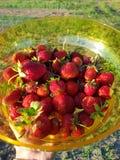 φρέσκες φράουλες στοκ φωτογραφίες