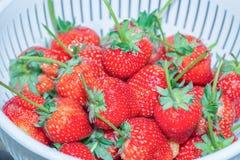 Φρέσκες φράουλες στο πλαστικό τρυπητό Στοκ Φωτογραφίες